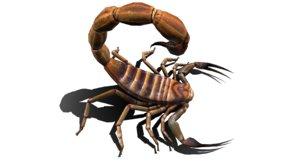 animal bug insect 3D model