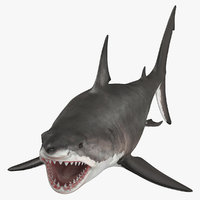 great white shark open mouth model