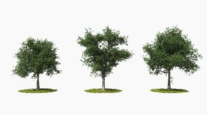tree animation 3D
