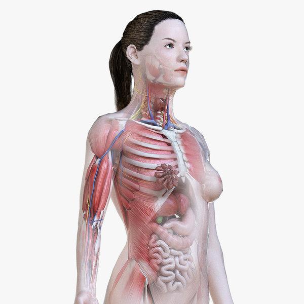 3D model female anatomy polys