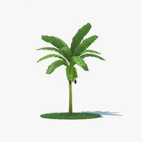 banana palm tree model