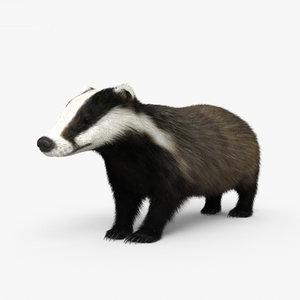 badger mammal animal 3D model