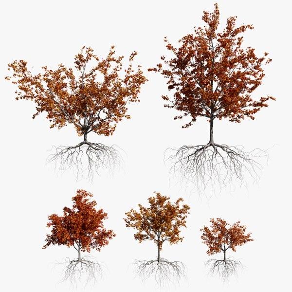 3D maple autumn trees