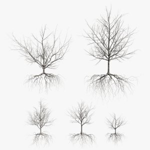 3D maple dry trees