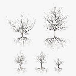 3D maple dry trees