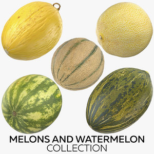 melons watermelon model