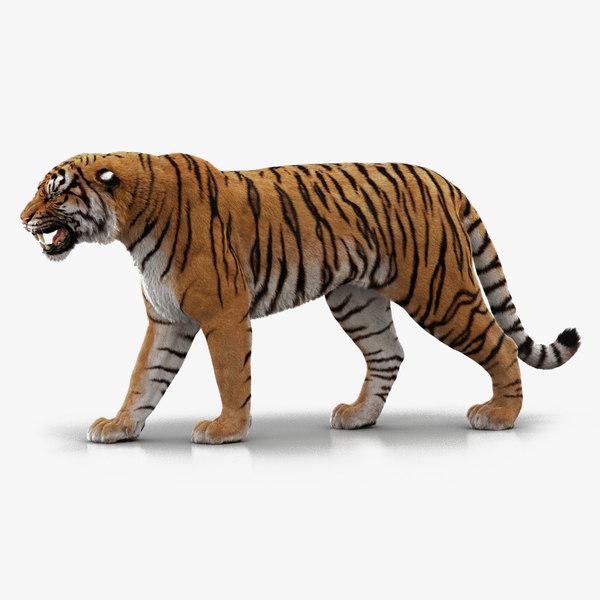 3D bengal tiger rigged fur model