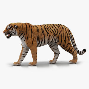 3D bengal tiger animation fur