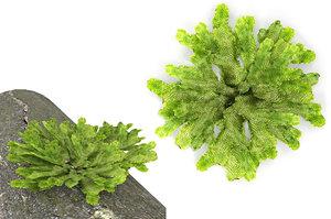 moss lichen 3D model