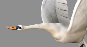 swan rigged flying animation 3D model