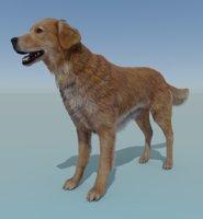 3D rigged dog golden retriever