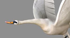 swan 3D
