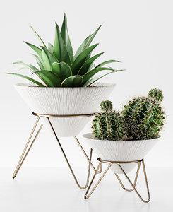 plants 225 cactus 3D