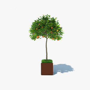3D model orange pot tree