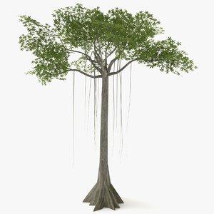 kapok tree polys 3D
