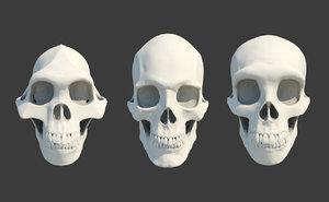 3D 3 skull neanderthal australopithecus model