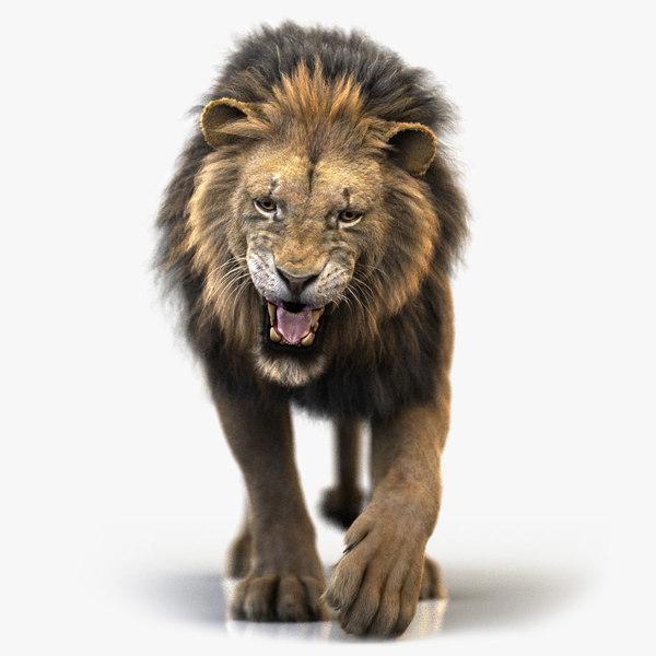 lion rigged fur model