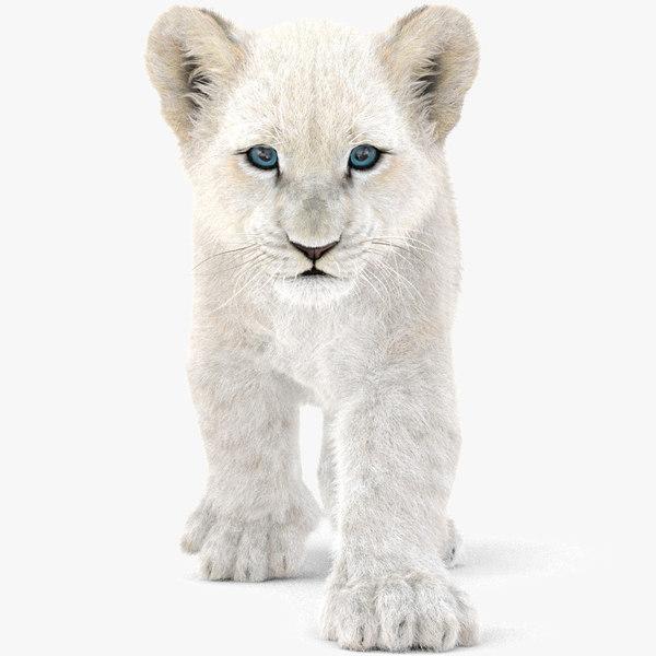 3D baby lion fur animation