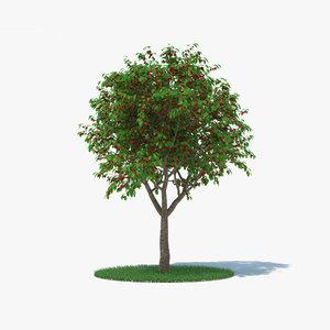cherry tree 3D