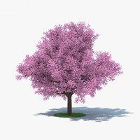 sakura tree 3D