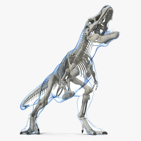 tyrannosaurus rex skeleton standing 3D