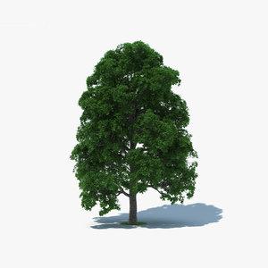 white oak tree model