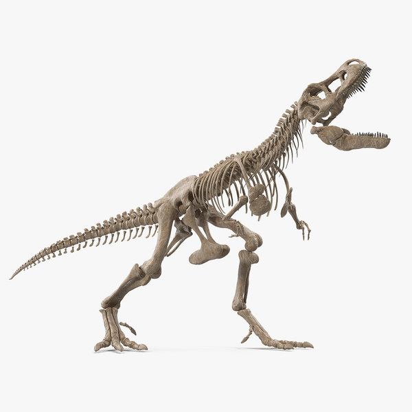 3D model tyrannosaurus rex skeleton standing