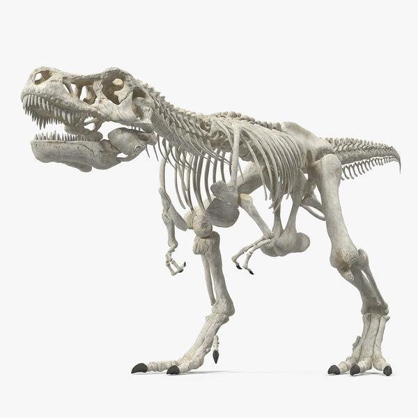 3D tyrannosaurus rex skeleton walking model