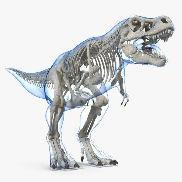 3D tyrannosaurus rex skeleton animal skin