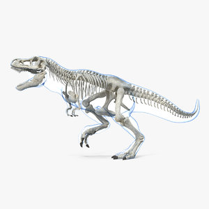 tyrannosaurus rex skeleton skin 3D model