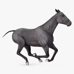 horse black rigged 3D