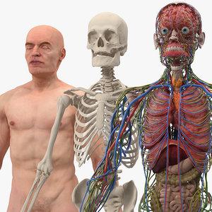 male skeleton internal organs 3D model