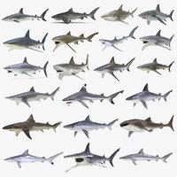 3D rigged sharks big