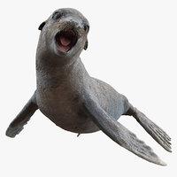 sea lion wet rigged 3D model