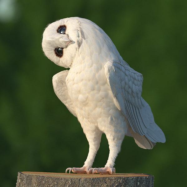 white barn owl rigged 3D model