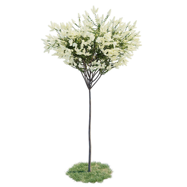 3D model blooming lilac - lagerstroemia