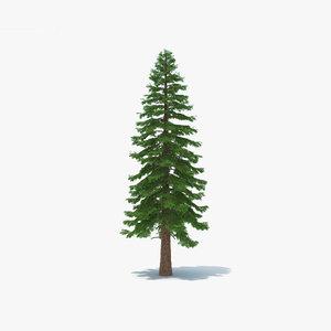 3D model redwood tree