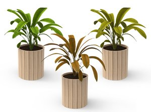 houseplants plants model