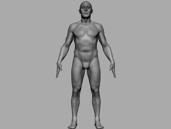 3D model human anatomy