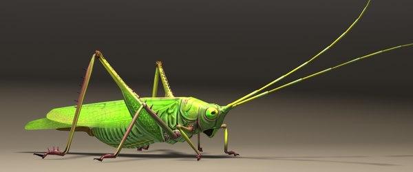 grasshopper animals 3D