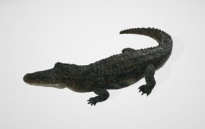 alligator animals 3D model