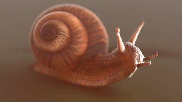 snail 3D
