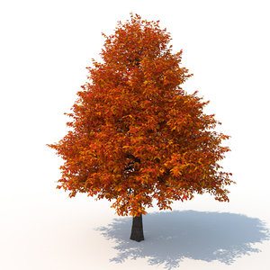 3D model black tupelo tree