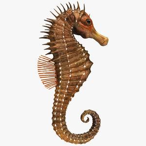 3D realistic sea horse