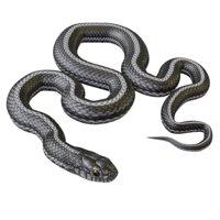 Animated Black White Snake