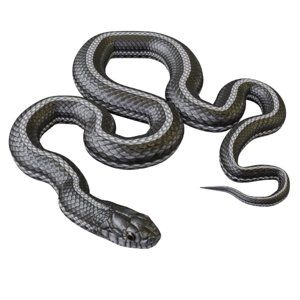 3D model black white snake