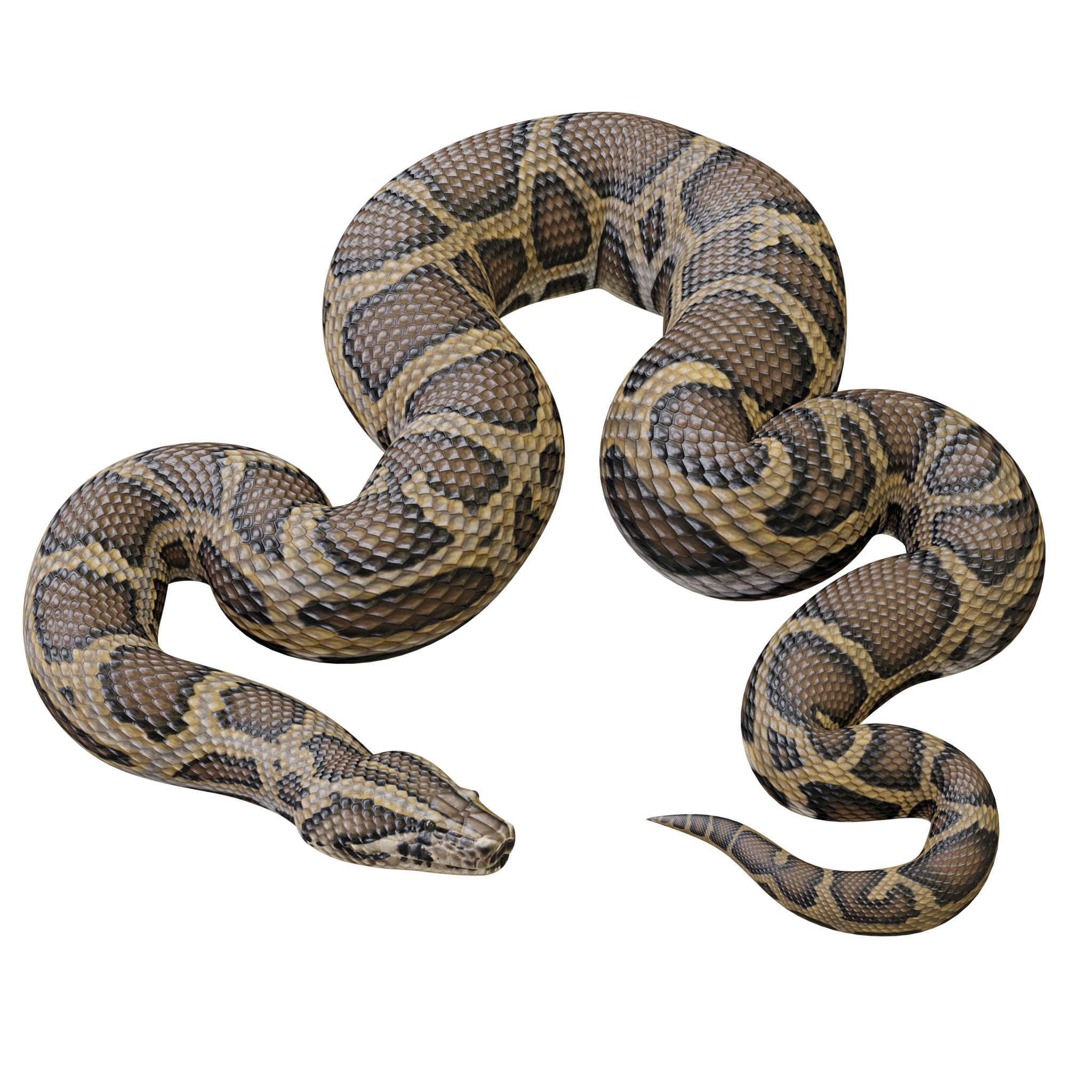 burmese python animation 3D model
