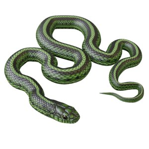 green snake model