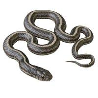 Animated Garter Snake