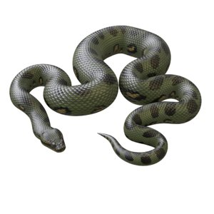 3D model green anaconda